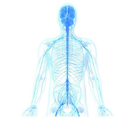 اهمیت ارزیابی سیستم اعصاب اتونومیک