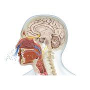روش های تشخیص اختلالات بویایی