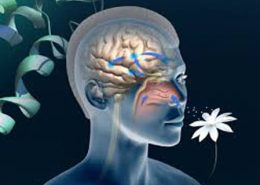 درمان حس بویایی و چشایی